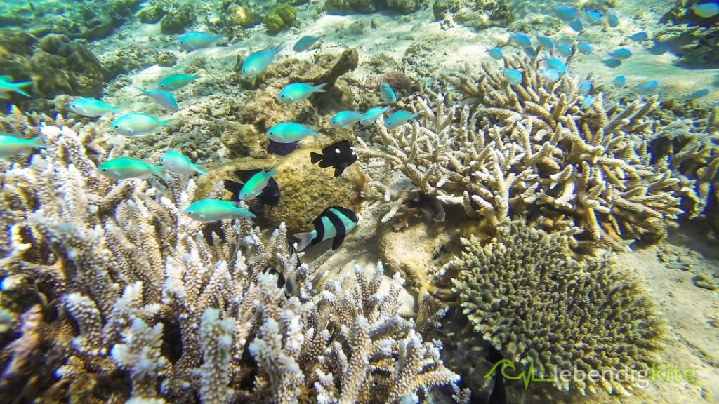 Schnorcheln Riff Ningaloo Reef Cape Range Oyster Stacks Turquoise Bay