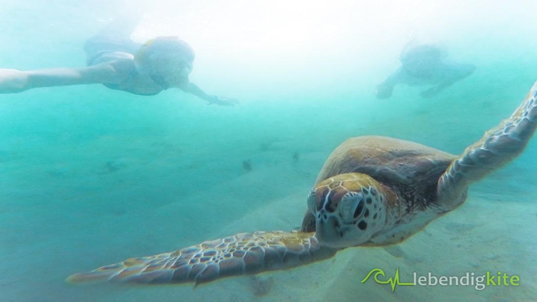 Schnorcheln Tauchen Exmouth Australien Cape Range Schildkröte
