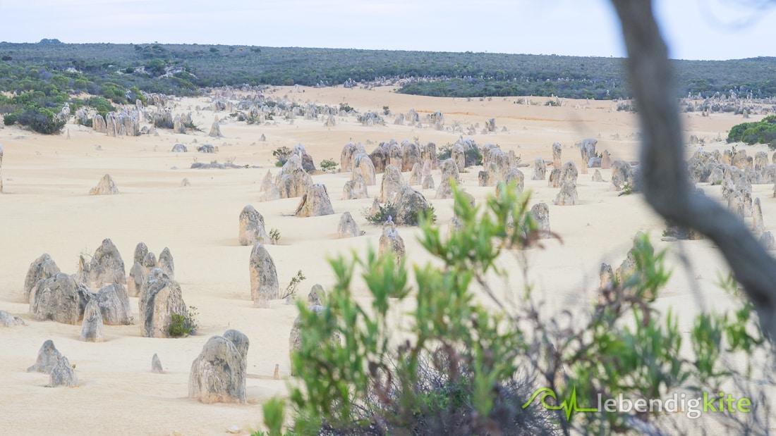 Pinnacle Dessert Sehenswürdigkeit Jurien Bay Westaustralien